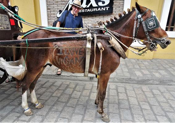 ...speziell geschorenem Pferd.....