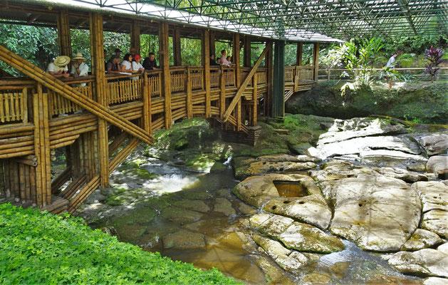 Schöne Bambusbrücke.