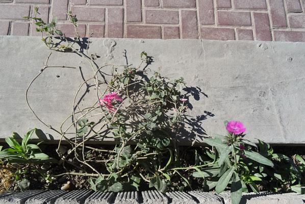 Asche auf den Blumen....