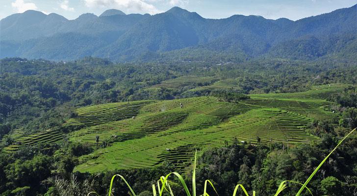Ein Blick in die Reisfelder...