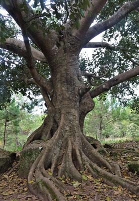 Der Liebesbaum der....
