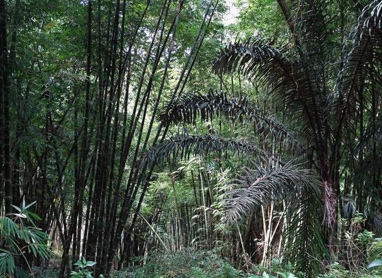 ....den Bambuswald.