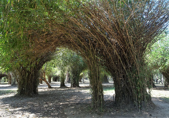 ......durch den Bambushain........