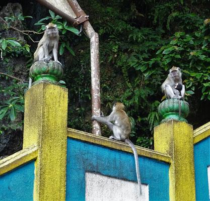 ....und der Affenbevölkerung.