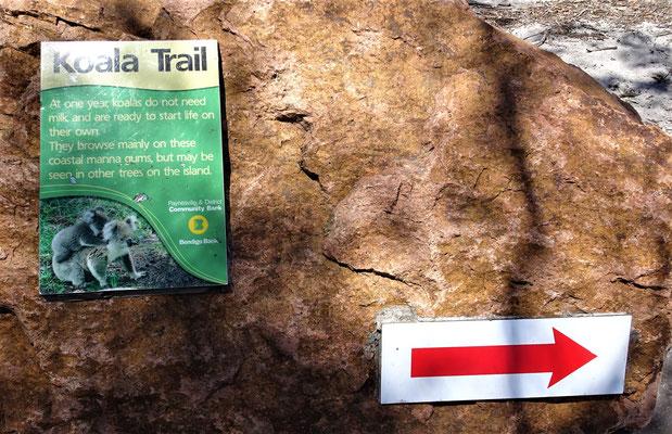 Der Koala Trail.....