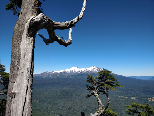 ......die natürlichen Mischwälder.