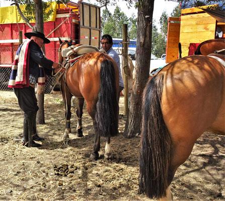 Auch die speziell dressierten Pferde.....