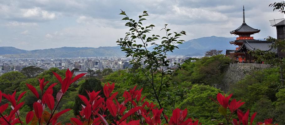 ....und auf Kyoto.