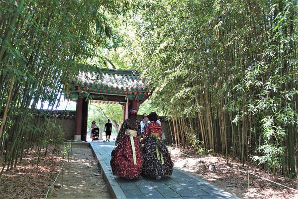 Der Bambushain auf dem Gelände.