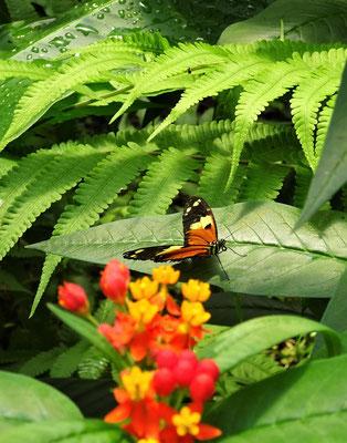 Viele bunte Schmetterlinge....