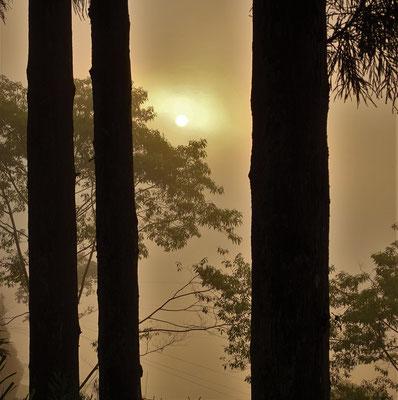 Die Sonne scheint durch den Nebel