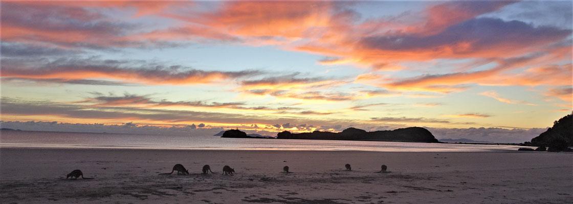 ....die Kängurus an den Strand.
