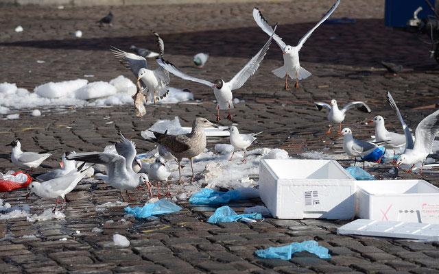 Vor Gier wird auch schon mal Plastik oder Gummi geschluckt (Foto: Beate Eisenhardt)