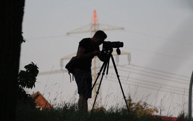 Mit Spektiv wird nach beringten Gänsen Ausschau gehalten | Foto: C. Mehler