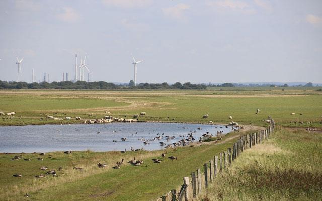 Wöhrdener Loch an der Meldorfer Bucht