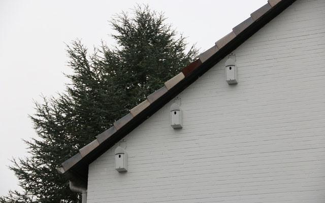 """Auf Abstand und unterm Dach """"lieben"""" es die Spatzen."""