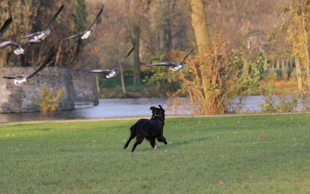 Häufig sind die Besitzer ganz woanders und bekommen gar nicht mit was ihr Hund macht