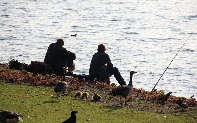 Angelt man an bestimmten wasservogelreichen Plätzen sind Konflikte vorprogrammiert