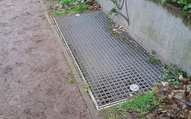 Kellerschächte können wie Gullis zur Todesfalle für Amphibien werden. (Foto: S. Hinrichs)