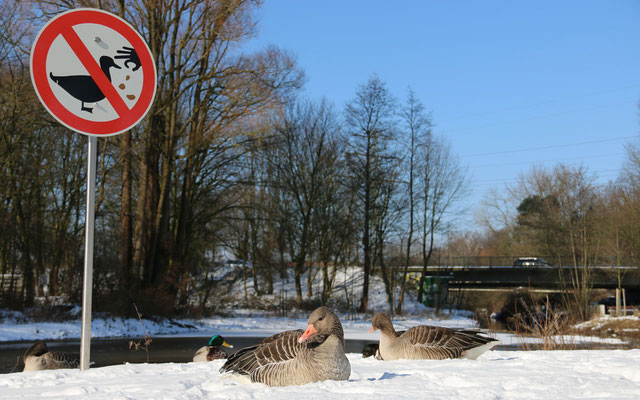 Fütterungsverbot nur für Enten?