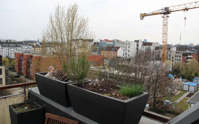 Wenn im März die Brutzeit der Graugänse beginnt, werden viele Dachterrassen noch nicht von den menschlichen Eigentümern genutzt