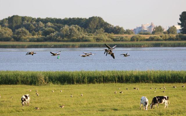 Elbe bei Kollmar