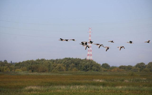 Vor allem bei Nebel sehen Vögel die Leitungen oft zu spät