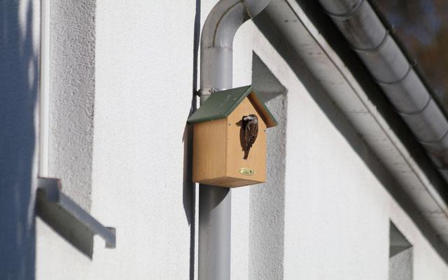 Wenn die Montage an gedämmten Wänden nicht gewünscht ist, lassen sich leichtere Nistkastenmodelle aus Holz auch einfach an Regenrinnen befestigen.