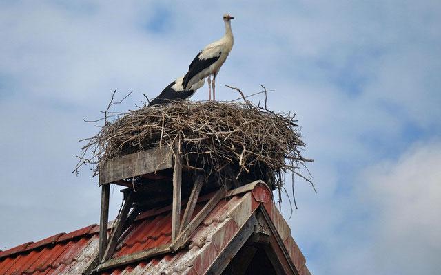 Ein weiteres Paar auf dem Nest
