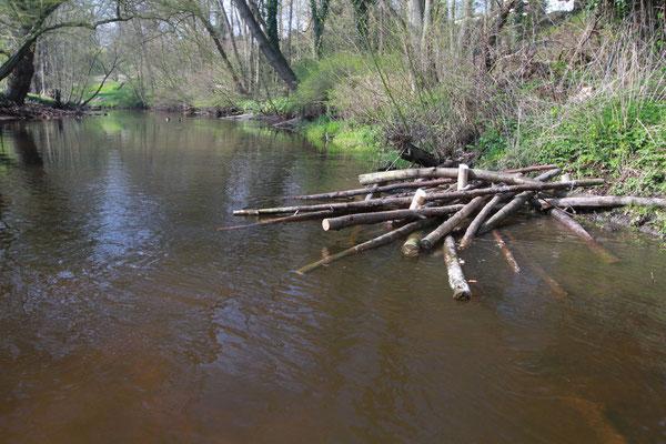 Entlang des Ufers werden sie als Fischunterstand und als Strukturelement platziert (Foto: A. Lampe).