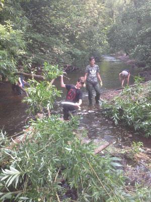 Eine über den Bach gefallene Weide wurde von Schülern gekappt und am anderen Ufer als naturnahe Uferbefestigung eingebaut (Foto: Lampe).