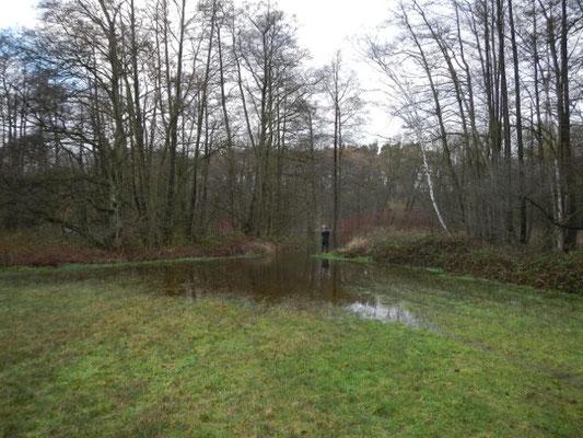 Wiesen und Grünanlagen nehmen bei Überflutung keinen Schaden.