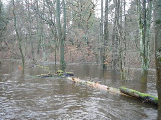 Schwimmendes Totholz, Sand und Schlamm werden bei Hochwasser in der Aue abgelegt.