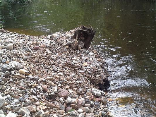 ... und sind gleichzeitig wichtiger Lebensraum für Kleintiere, die die Flusssohle bewohnen