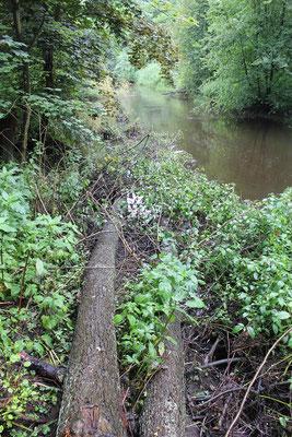 An das Ufer gezogene Bäume behindern den Abfluss nicht.