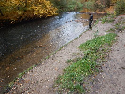Vor der Maßnahme: das Ufer ist durch Menschen und Hunde zertreten und erodiert