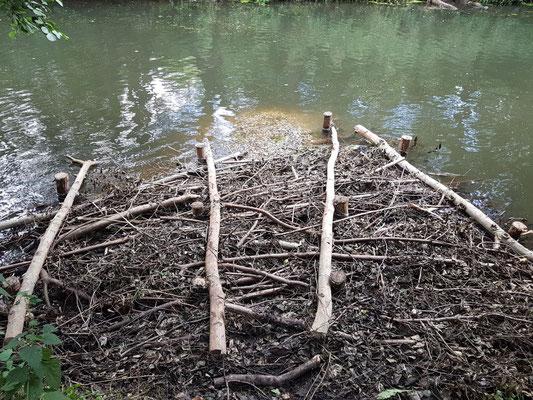 Die Alster fließt bei den zum Zeitpunkt der Aktion sehr geringen Abflüssen nur träge (Foto: A. Lampe).
