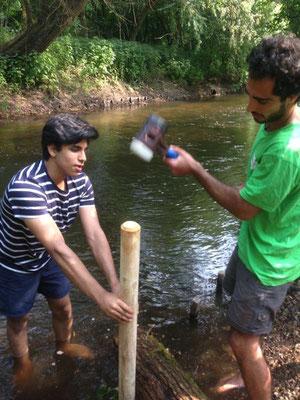 Damit das Holz beim nächsten Hochwasser nicht bachabwärts schwimmt, wird es mit Draht an vorher eingeschlagenen Pflöcken befestigt  (Foto: Lampe).  (Foto: Lampe)