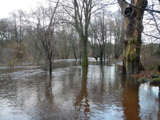 Bäume im Wasser - im Alsterauwald bei Hochwasser.