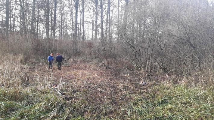 Die Weiden wurden einige Meter zurück gedrängt (Foto: A. Lampe).
