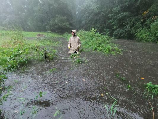 Es schüttete in Strömen und innerhalb einer halben Stunde stieg der Pegel um 1,20 Meter (Foto: A. Lampe).