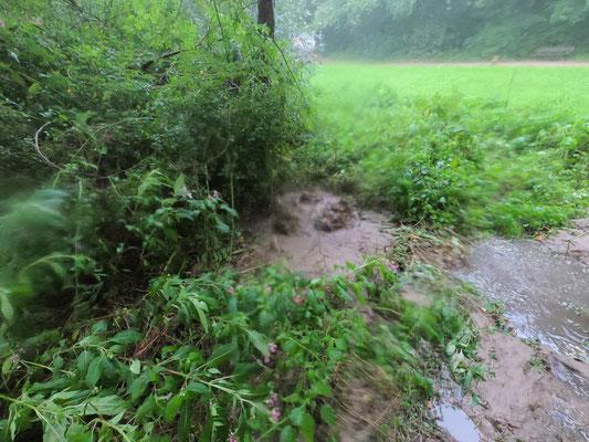 Aus einem gebrochenen Straßensiel sprudelt das Wasser auf eine flussnahe Grünfläche. Man kann erahnen, welche Sandmassen aus den Straßensielen in die Alster gelangen (Foto: A. Lampe).
