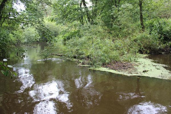 Das Totholz ist ein wichtiger Lebensraum für viele Tiere am und im Fluss.