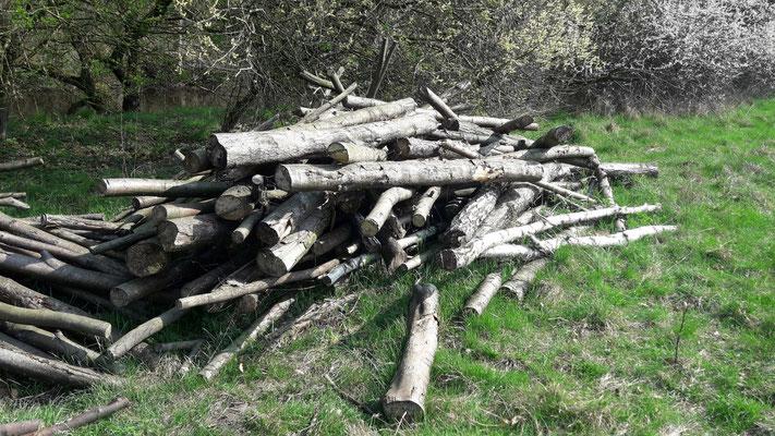 Diese Erlenstämme sollen entweder in der Alster eingebaut oder als Totholzhaufen auf der Schleife platziert werden (Foto: A. Lampe).