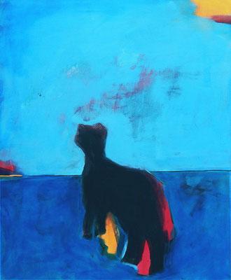 Bild blau Katze Tier