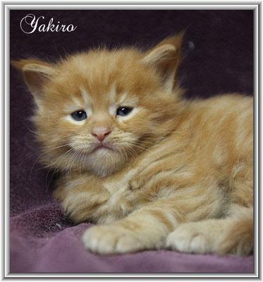 Yakiro 4 Wochen