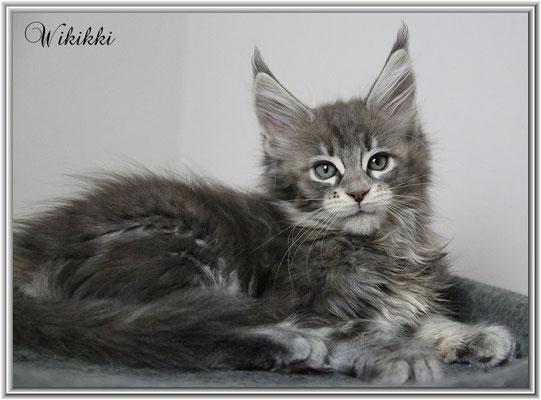 Wikikki 11 Wochen