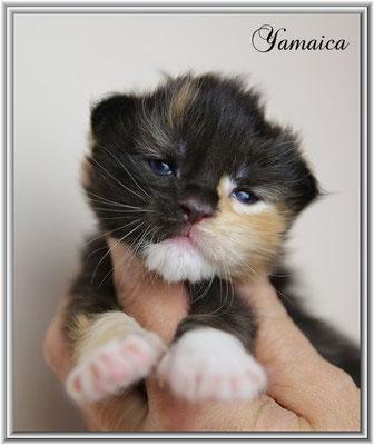 Yamaica 12 Tage