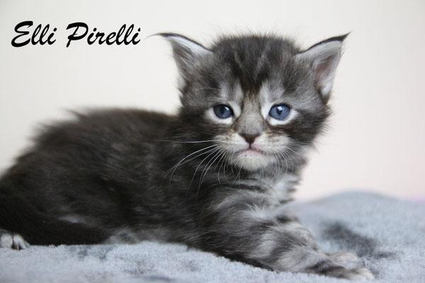 Elli Pirelli 3,5 Wochen