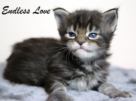 Endlees Love 3,5 Wochen